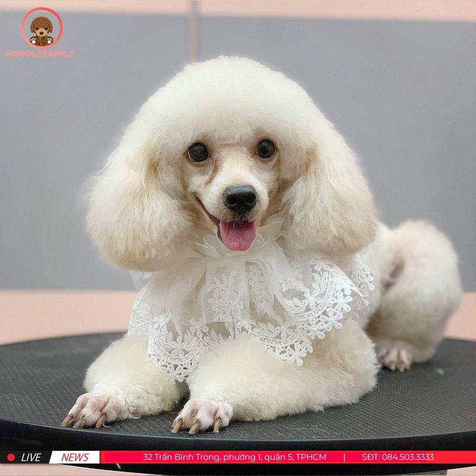 Dịch vụ chăm sóc thú cưng Spa Grooming
