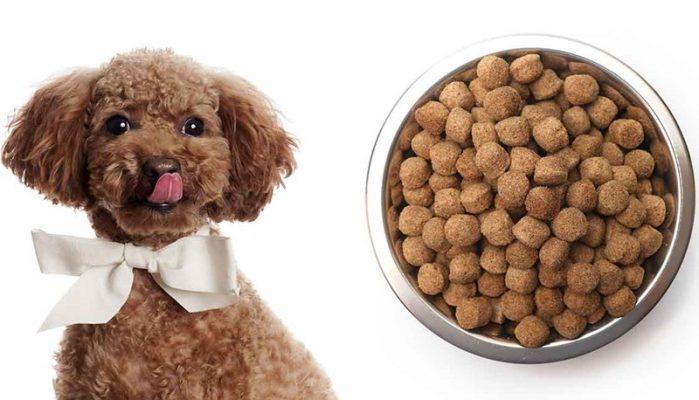 sai lầm việc bổ sung canxi cho chó poodle quá nhiều