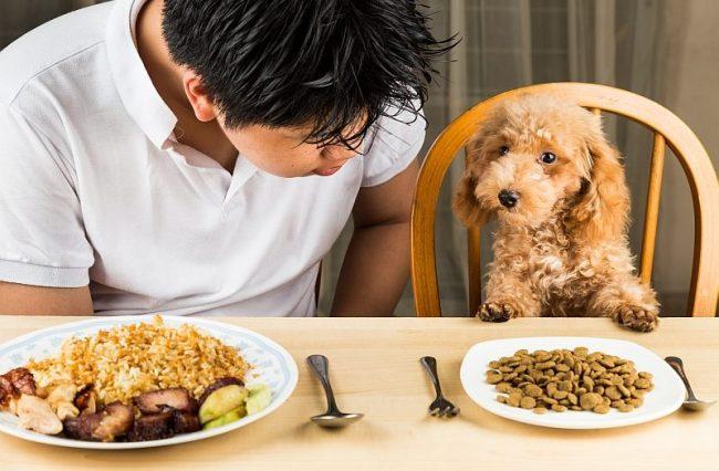 bổ sung canxi cho chó poodle